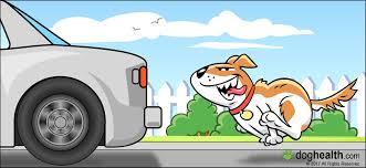Dog chasing acar